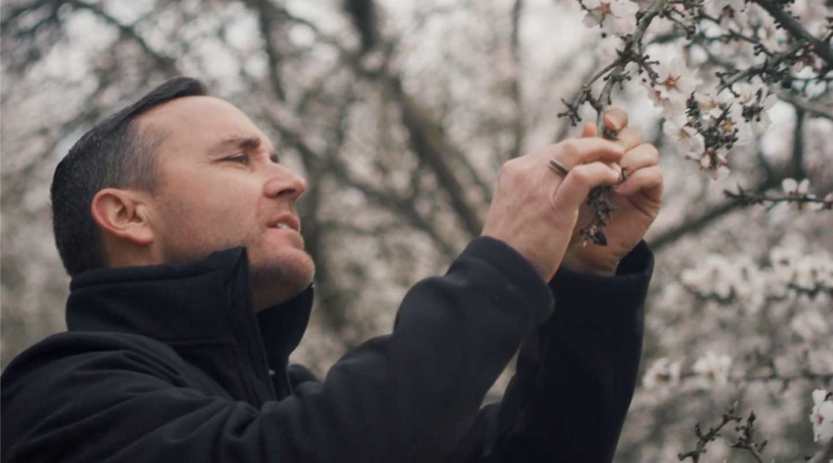 man checking blooms on almond tree